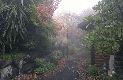 דצמבר 16, חורף של ממש עם ערפל סביב